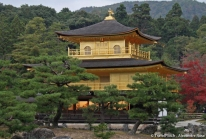 Kinkaku-ji : le temple du Pavillon d'Or de Kyoto