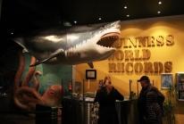 Guinness World Records Museum : la version live du livre best-seller